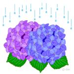 梅雨だる、梅雨時の体調不良は、家にこもるのが一番!